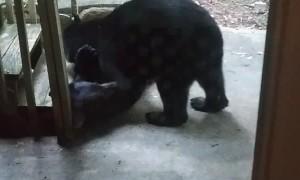 Bears Bring Nature Show to Front Door