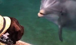 Service dog amazingly plays with friendly dolphin