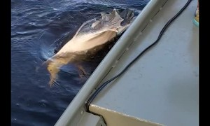 Turtle Snatches Pliers From Fisherman