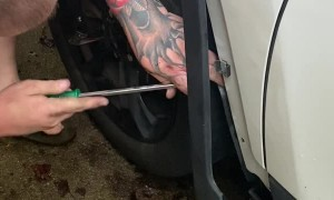 Getting a Kitten Out of the Car