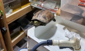 Reviving a Rescued Turtle