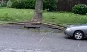 Footage captures the moment Hurricane Isaias knocks over tree in Long Island