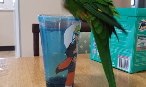 Birdie Trying to Bathe in an Empty Cup