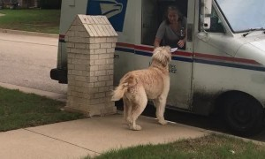 Reggie Taking a Rose to the Mail Lady