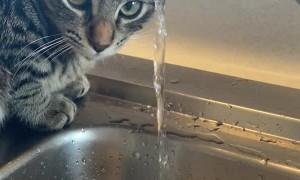 Cat Puts Face Under the Faucet