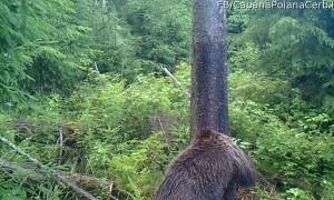 Bear Family in Romania