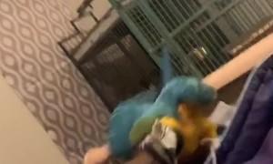 Parrot Doesn't Appreciate Nickname