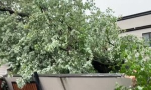 Fallen tree totally uproots garage in Chicago ally
