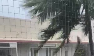 Wind Whipped Palm Tree Waves by Balcony