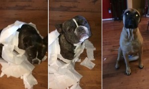 French Bulldog hilariously gets outed by supposed best friend