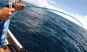 Fisherman Feeds Hungry Hammerhead