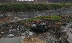Rescuing a Dog Stuck on a Swampy Island