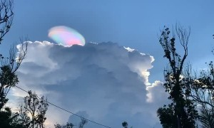 Stunning Pileus Iridescent Cloud Shines in the Sky