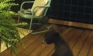 Bear Cub Gets in Trouble with Momma
