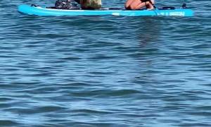 Sammy the Seal Hijacks Paddle Board