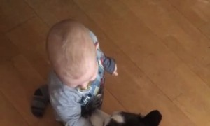Husky Playing with Baby