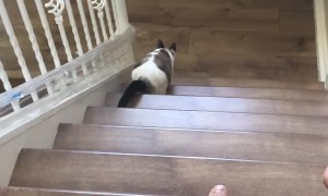 Kitty Learns to Play Fetch on the First Try