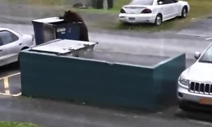Hungry Bear Dumpster Dives