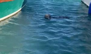 Otter Shenanigans