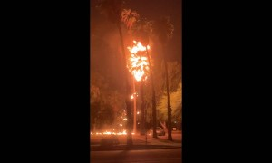Lightning Strike Palm Tree Fire