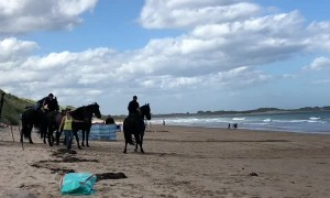 Iconic Black Stallions Saunter Along Beach for Bank Advertisement