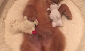 Puppy Enjoys Bedtime With His Favorite Bear