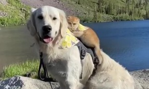 Cat rides on the back of doggy best friend for adventure time