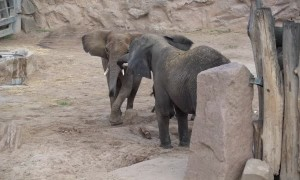 Elephant reunites with daughter and granddaughters after 12-year separation