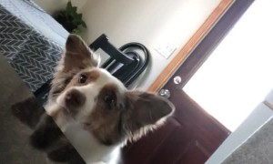 Clever Dog Puts Paws up for More Hugs