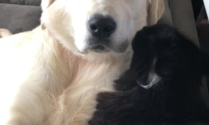 Doggy Loves to Be Cleaned by Cat