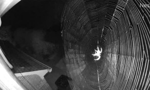 Security Camera Captures Spider Web Construction