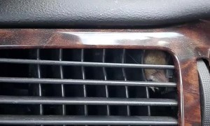 Mouse Finds Itself in Car Vent