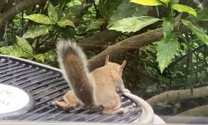 Squirrel Uses Air Conditioner Fan to Cool Off