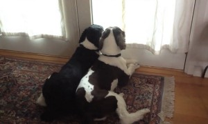 What Do Dogs Do After You Leave? This Sums It Up!