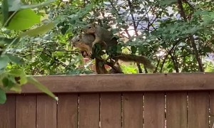 Squirrels Acting like a Married Couple