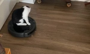 Cat Rides Robot Vacuum Cleaner
