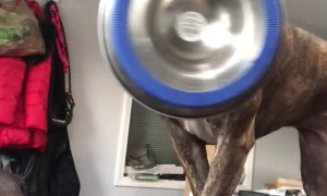 Hungry Dog Dramatically Delivers Food Bowl