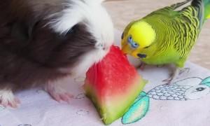 Animals Munch on Melon