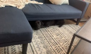 Dog Gets Herself Stuck Under New Couch