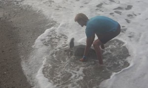 Lending a Beached Sea Turtle a Helping Hand