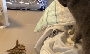 Kitties Have a Swift Standoff