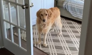 Opening the Door for the Dog