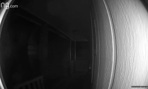 Tarantula Crawls Across Doorbell Camera