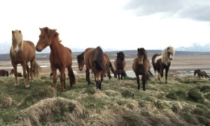Majestic Wild Horses Discover A New Human Friend