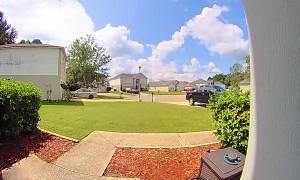 Lizard Sets Off Doorbell Camera