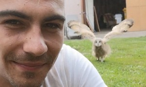Baby Owl Amazingly Runs Over When Called