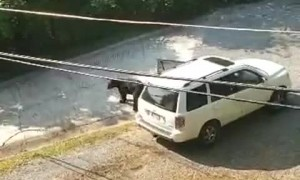 Bear in Gatlinburg Raids Car during Honeymoon