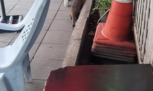 Pouncing Cat Gets Caught Being Clumsy