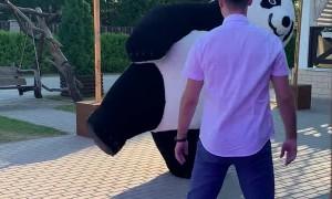 Dance Battle Between Panda And Guest