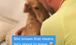 Pup gets sad every time owner gets dressed for work